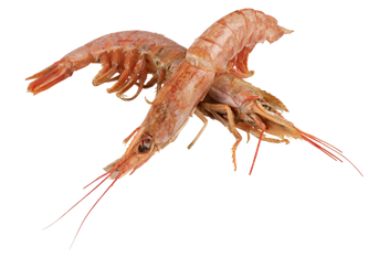 two Argentinian red prawns - they're pinkish brown and have their heads and shells intact